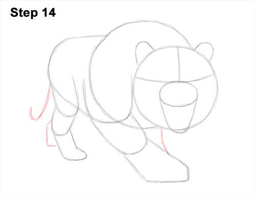 How to Draw a Mean Tiger Roaring Growling Stalking 14