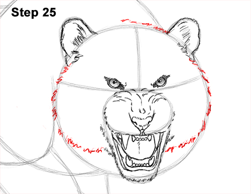 How to Draw a Mean Tiger Roaring Growling Stalking 25