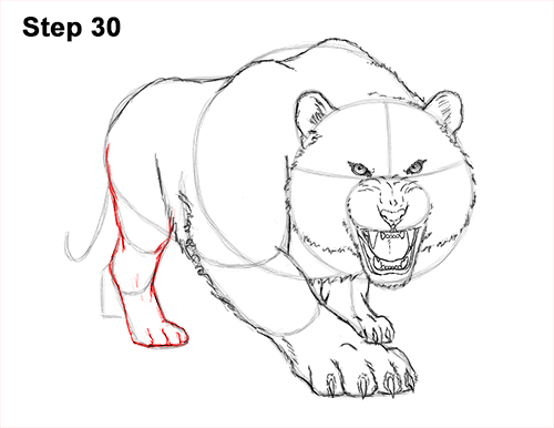 How to draw a mean tiger roaring growling stalking 30 step