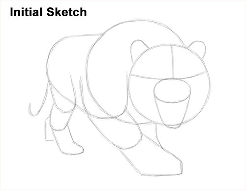 How to Draw a Mean Tiger Roaring Growling Stalking Initial Sketch