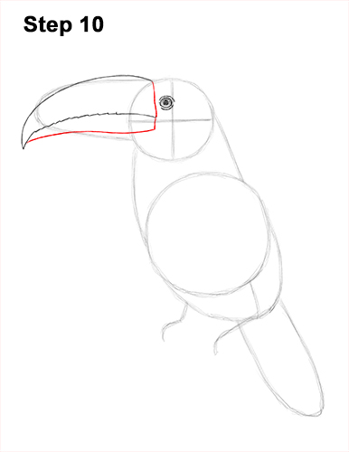 Draw Toucan Bird 10