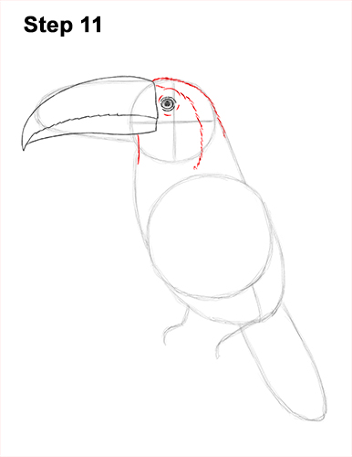 Draw Toucan Bird 11