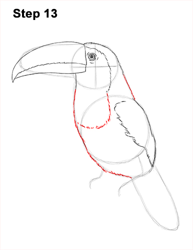 Draw Toucan Bird 13