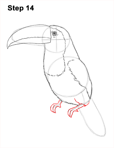 Draw Toucan Bird 14