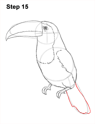 Draw Toucan Bird 15