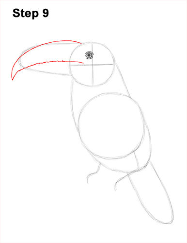Draw Toucan Bird 9