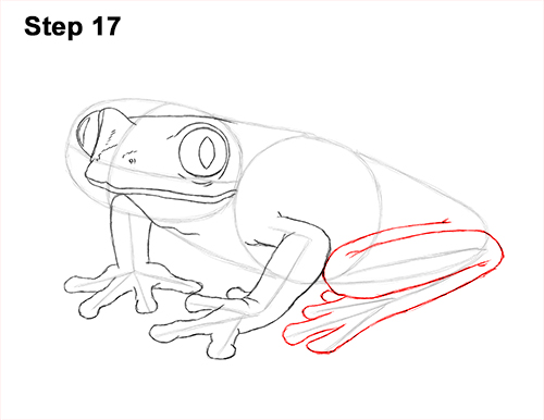 How to Draw a Red-Eyed Tree Frog 17