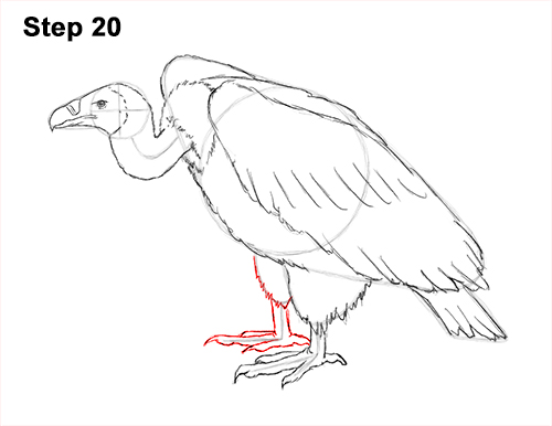 Draw Vulture Bird 20