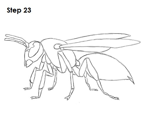 Line Drawing Insects : Wasp drawing related keywords long tail
