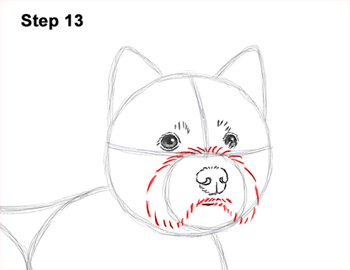 How to Draw a West Highland White Terrier Puppy Dog 13