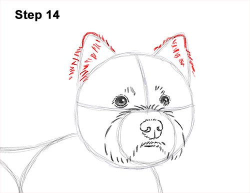 How to Draw a West Highland White Terrier Puppy Dog 14