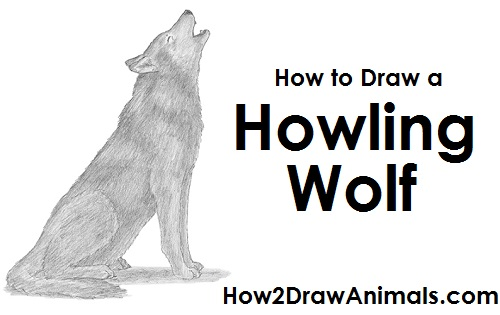 Draw a Wolf  Howling   video after each step to draw at your own pace