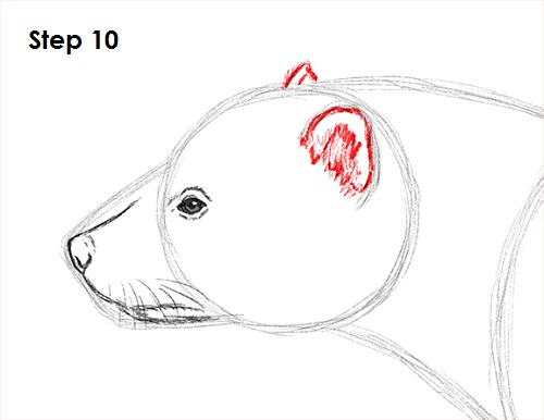 how to draw wolverine face