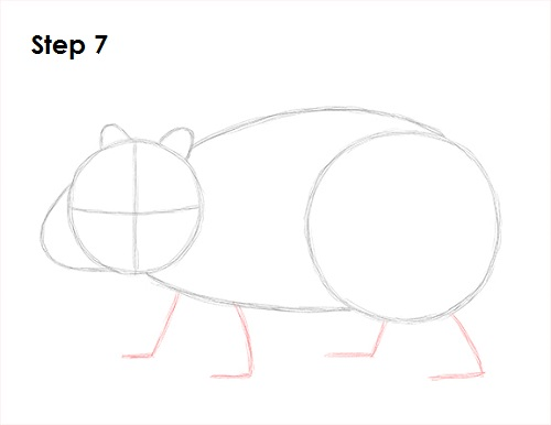 how to draw a wombat youtube