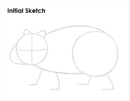 how to draw australian animals easy