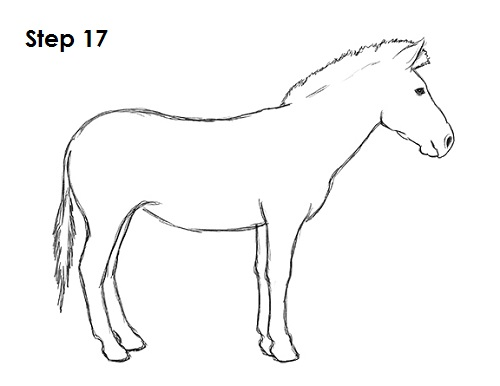 Line Drawing Zebra : How to draw a zebra