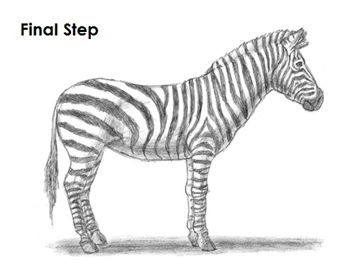 Easy Zebra Pencil Drawing