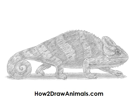 How to Draw a Chameleon