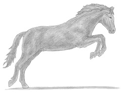 How to draw a Horse Jumping