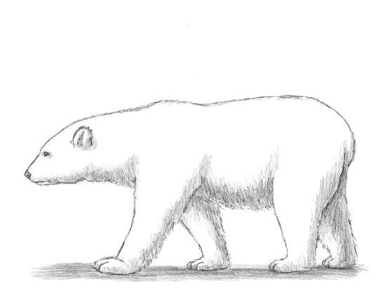 How to draw a White Polar Bear