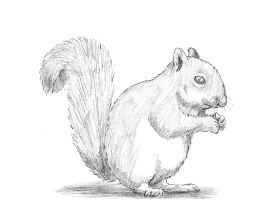to Draw a Squirrel