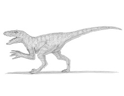 How to draw a Velociraptor Dinosaur