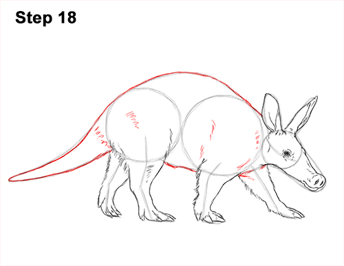 How to Draw an Aardvark Anteater Walking 18