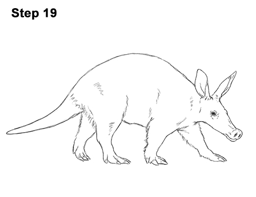 How to Draw an Aardvark Anteater Walking 19