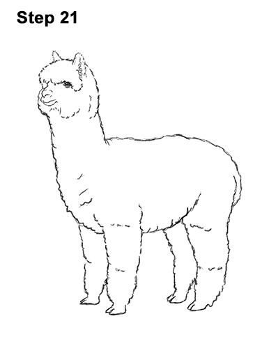 How to Draw an Alpaca Llama 21