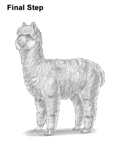 How to Draw an Alpaca Llama