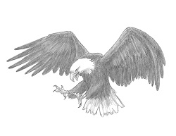 How to Draw a Bald Eagle Flying Hunting Raptor Bird