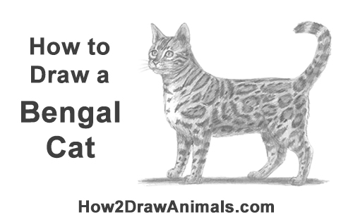 How to Draw Bengal Kitten Cat Spots