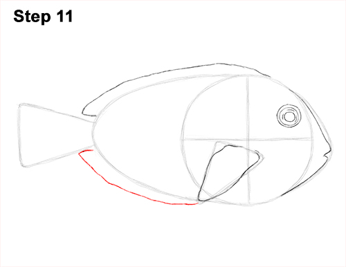 Draw Regal Blue Tang Fish 11