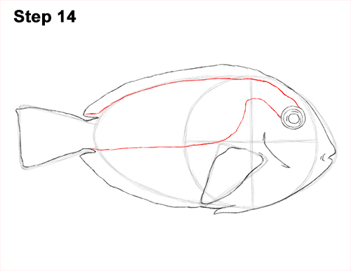 Draw Regal Blue Tang Fish 14