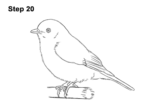 How To Draw A Bluebird Video Step By Step Pictures