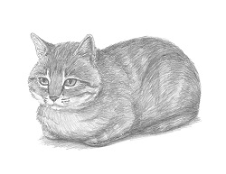 How to Draw a Tabby Cat Loafing Laying