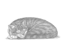 How to Draw a Sleeping Tabby Cat