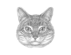 How to Draw a Tabby Kitty Cat Face Head Portrait