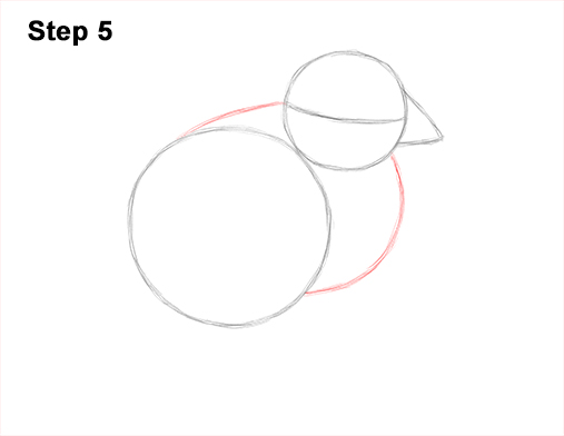 How to Draw Cute Baby Chick Chicken Hen 5