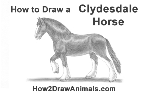 How to Draw a Clydesdale Shire Horse