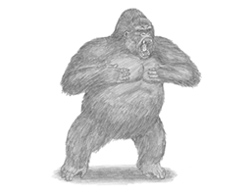 How to draw a Gorilla Aggressive Angry Mad