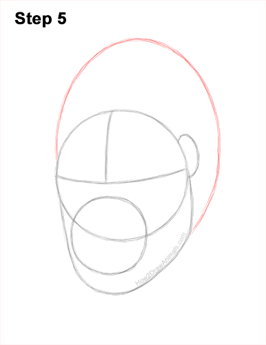 How to Draw a Gorilla Head Face Portrait 5