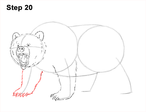 Draw a Growling Grizzly Bear Walking 20