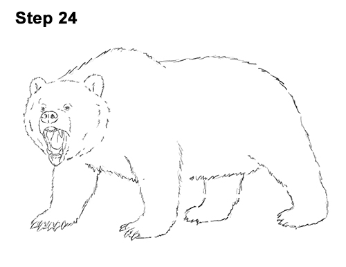 Draw a Growling Grizzly Bear Walking 24