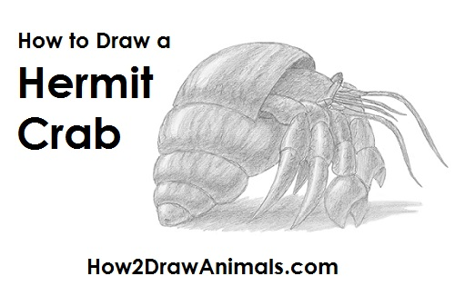 Draw Hermit Crab