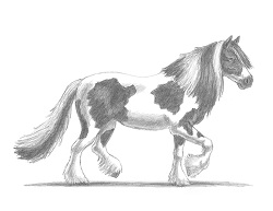 How to Draw a Horse Gypsy Vanner
