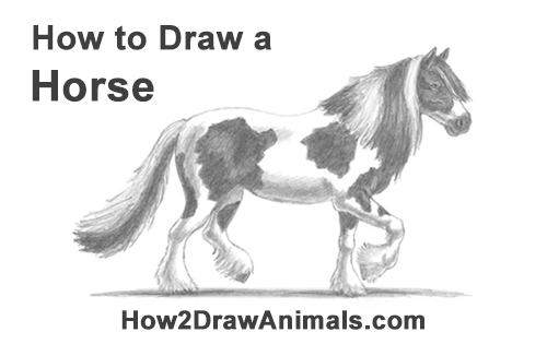 How to Draw a Horse Gypsy Vanner Irish Cob