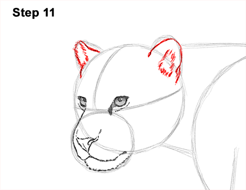 How To Draw A Jaguar Video Step By Step Pictures