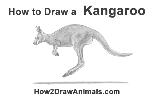 How to Draw a Red Kangaroo Jumping Hopping Leaping