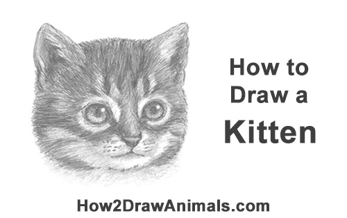 How to Draw Cute Cat Kitten Head Face Portrait